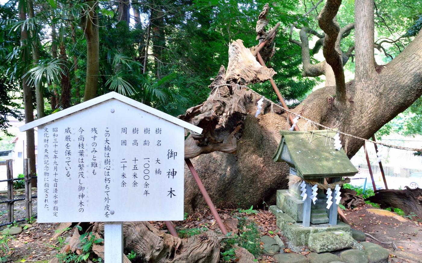 kusanagi_jinja_07