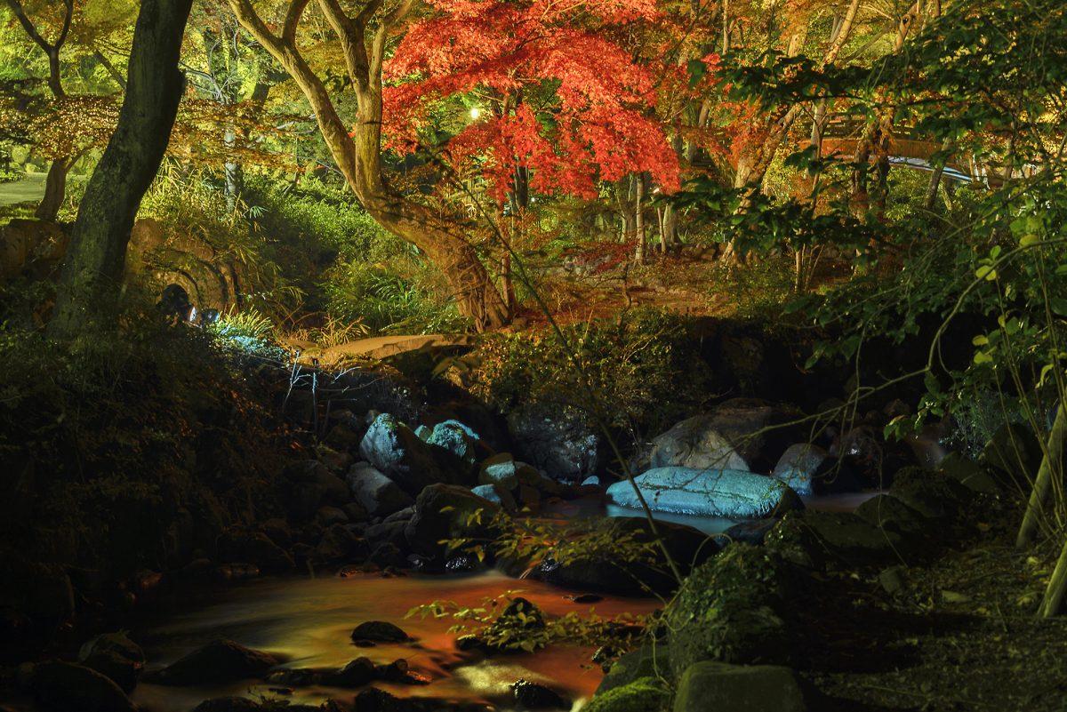 「熱海梅園」なら12月に紅葉が楽しめる!? 風光明媚な冬の熱海を満喫