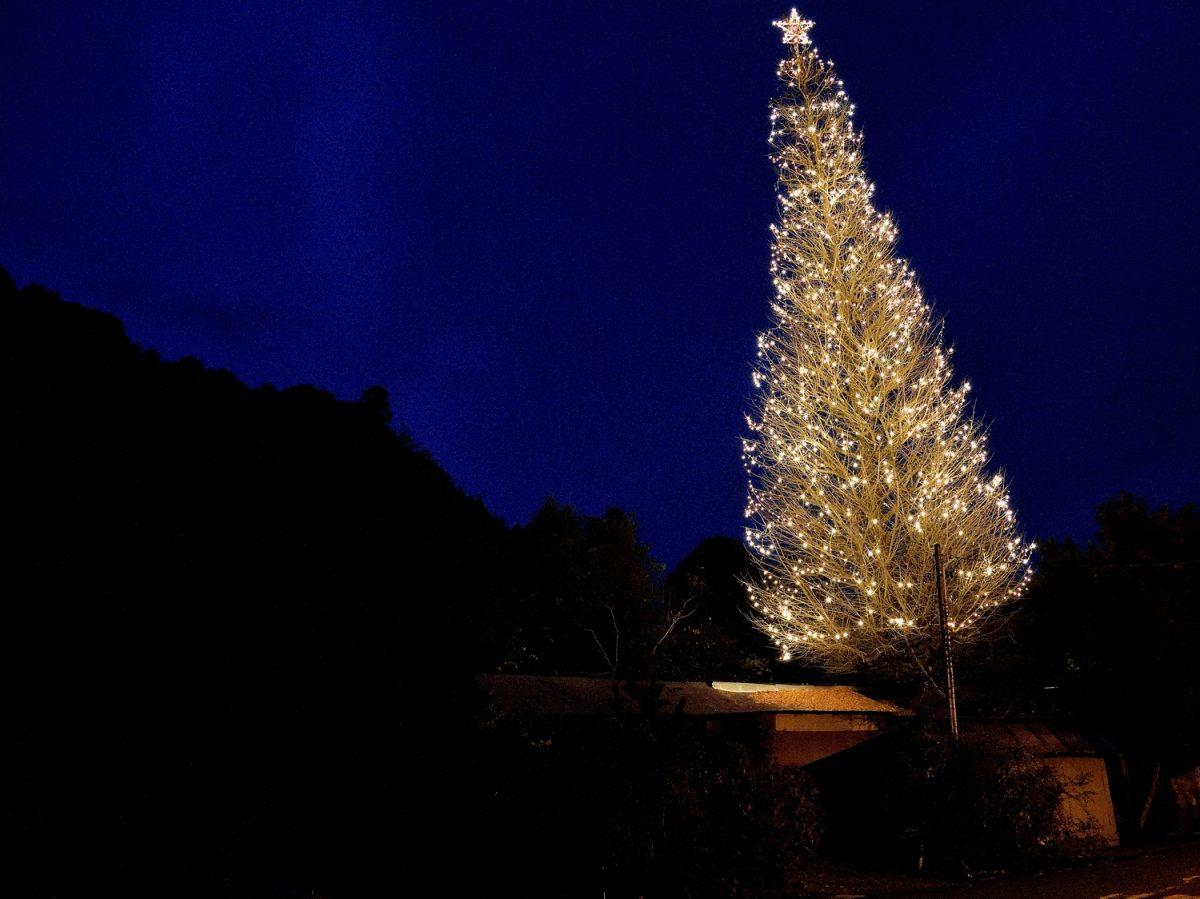 藤枝・瀬戸ノ谷にたたずむ「峠のツリー」 樹齢200年の大銀杏がともす夢の灯