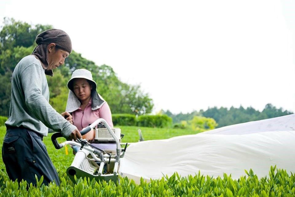 オーストラリアで出会って浜松市天竜区に移住 茶園「茶空民」を営む山本さんご一家について