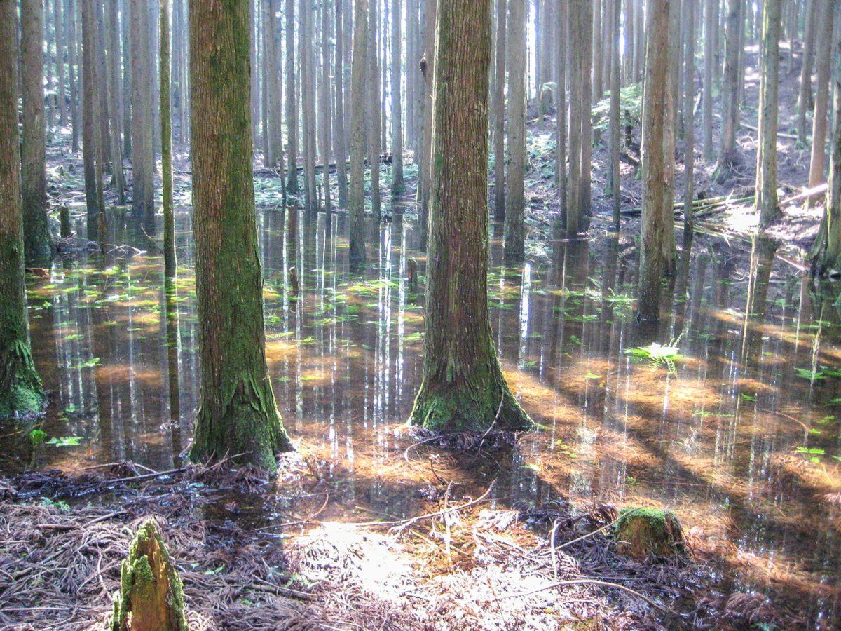 遠州七不思議「池の平 幻の湖」へ大探検! 7年に1度だけ山頂に伝説の池が現れる?