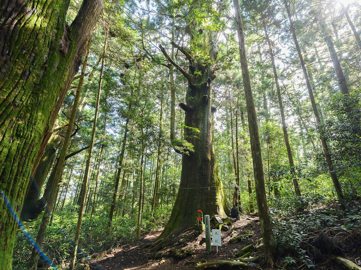島田のパワースポット「千葉山」【miteco登山部】 天然記念物の巨木群「十本杉」が圧巻!