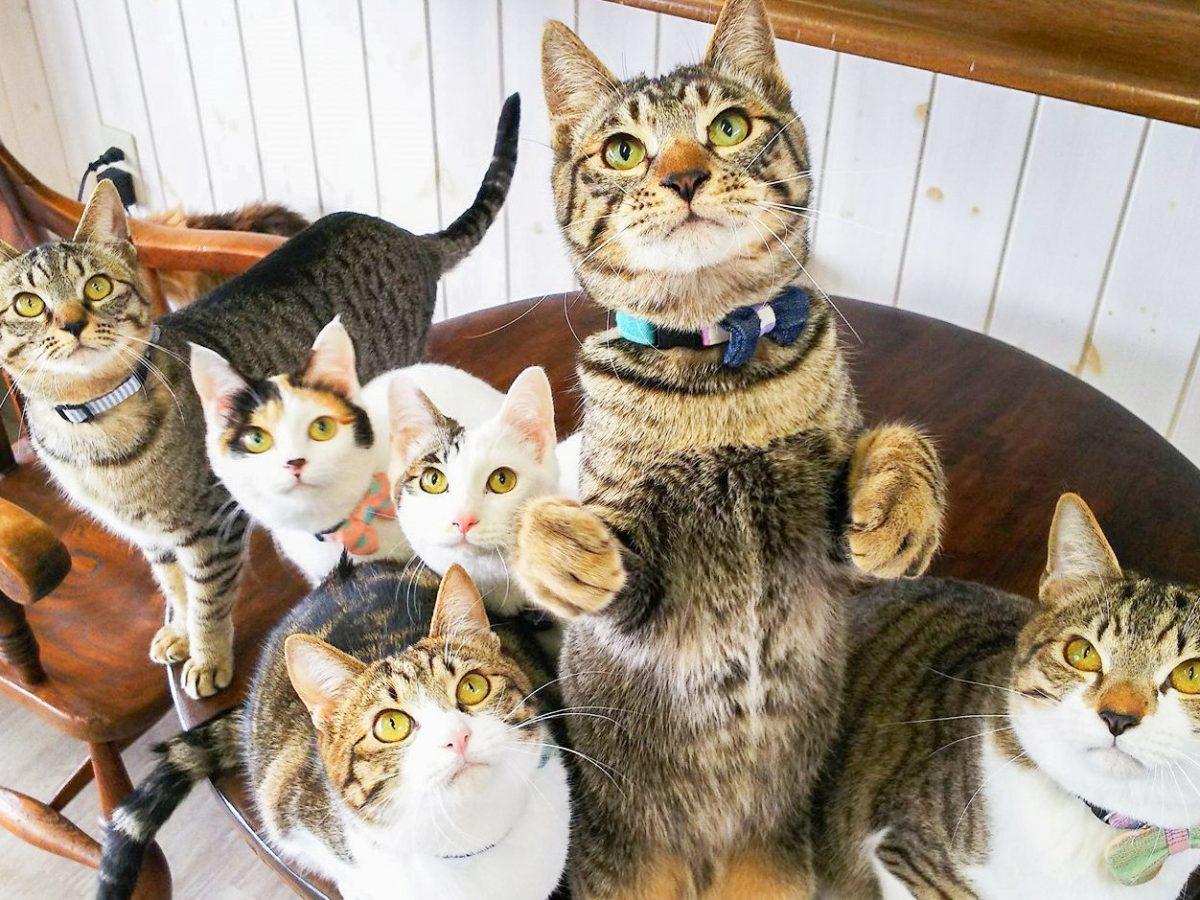 もてなし上手な美男美女が揃う猫カフェ 「ロゼッタ」を猫スタッフがごあんニャい!
